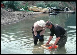 Digging for Sapphire at El Dorado Bar, Montana